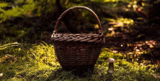 На Могилёвщине обнаружили радиационные грибы и клюкву