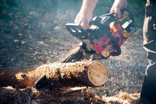 С 1 января 2019 года россияне получили право бесплатно собирать в лесах валежник - лежащие остатки стволов деревьев, сучьев.