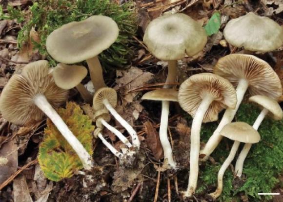 В Сочинском нацпарке нашли новый вид гриба