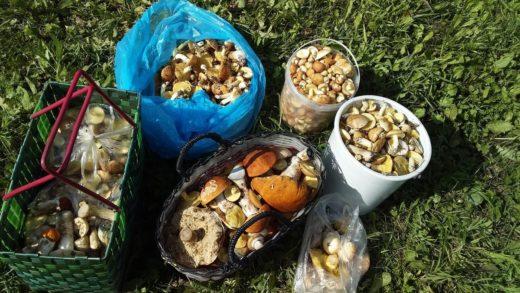 Килограммы грибов выносят нижегородцы из лесов, переживания по поводу частых дождей компенсировались хорошим урожаем.