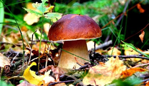 Администрация Рыбновского городского поселения Рязанской области приглашает всех желающих принять участие в чемпионате Охотник за грибами.