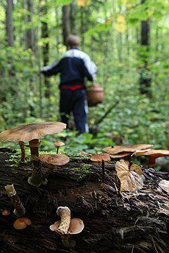 Тест iПоГрибы: «Ощущение, что я не грибы собираю, а радиацию ищу»