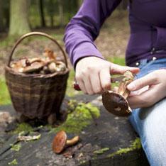 Если ты нормальный человек, ты собираешь грибы