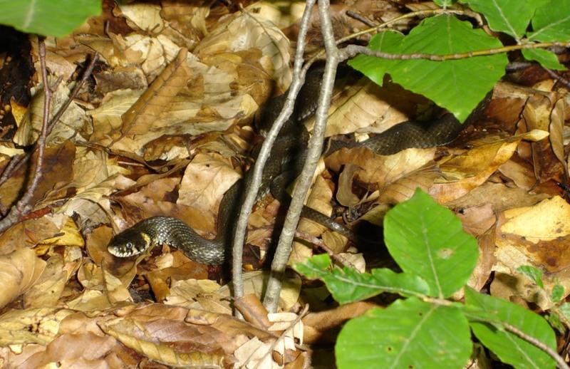 Действия при укусе змеи