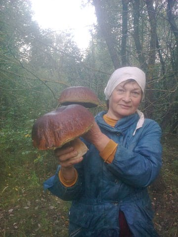 Под Минском растут грибы-великаны