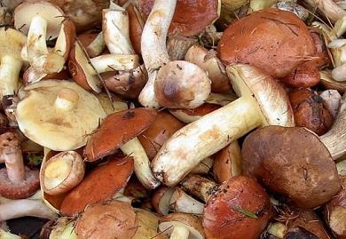 На Днепропетровщине зарегистрирован первый случай отравления грибами
