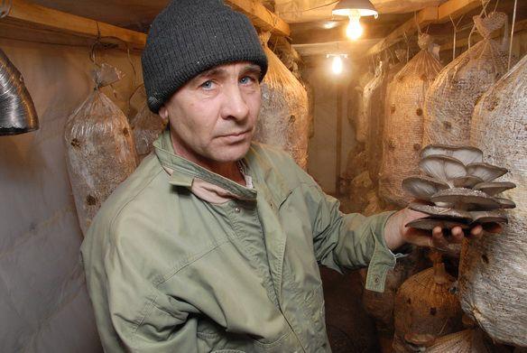 Фотофакты. Житель Алтая выращивает дома грибы
