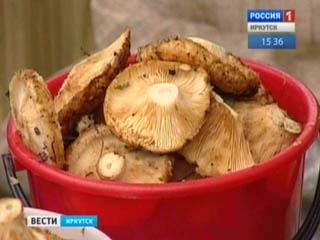 В Прибайкалье хороший урожай грибов и ягод