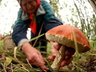 На украино-белорусской границе закончился упрощенный пропуск сборщиков грибов и ягод