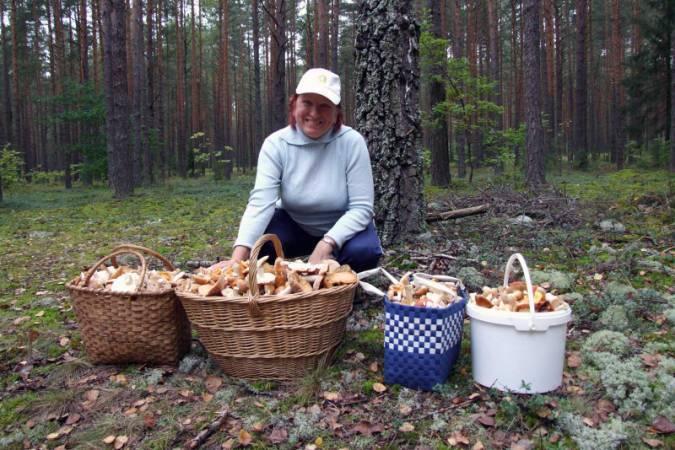 Начались дожди, а вместе с ними и грибная пора. На рынках и уличных пятачках продают грибы в ведрах и просто кучками по несколько штук. Найти их не составляет труда.