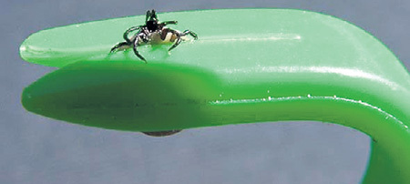 Крючок для удаления клеща похож на гвоздодер. В комплект входят два крючка для удаления разноразмерных особей...
