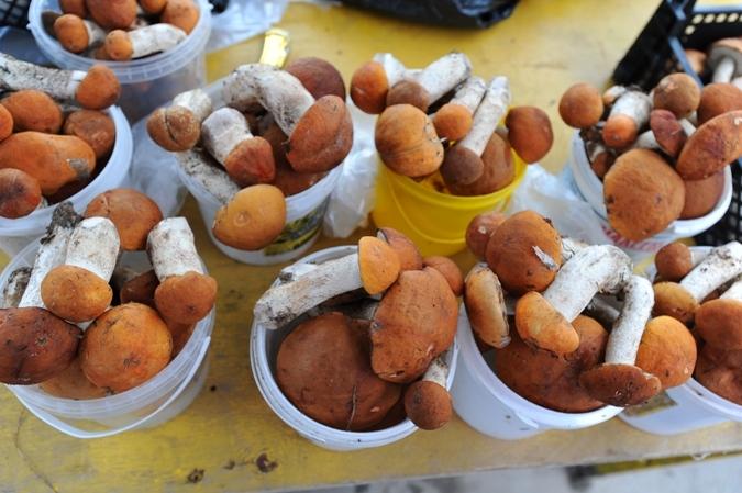 Брать грибы на рынке неохота? Выезжай на тихую охоту!
