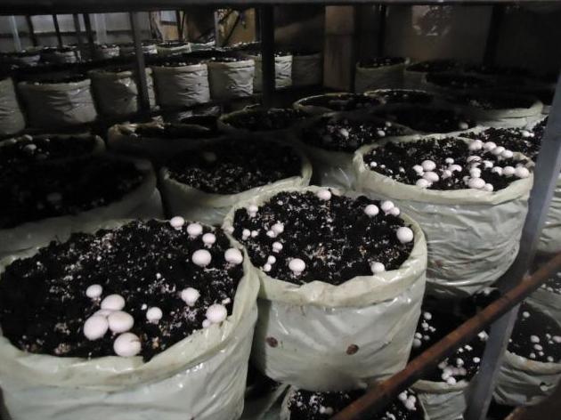Специалисты Россельхознадзора проверили предприятие по выращиванию шампиньонов в Удмуртии
