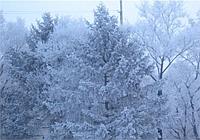 Народные приметы: холодный январь — поздние грибы