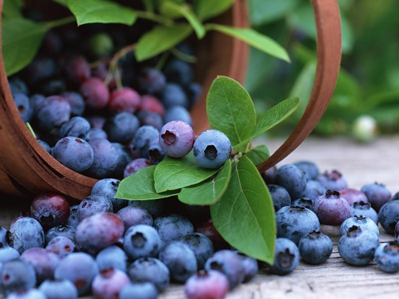 Агентство лесного хозяйства Иркутской области установило сроки сбора дикорастущих плодов и ягод на 2012 год