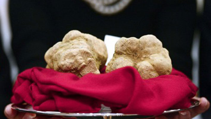 Белые трюфели продали в три раза дороже золота