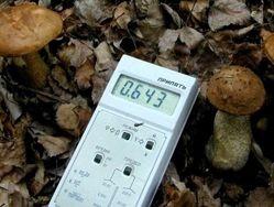 Уровень радиации зашкаливает в дарах лесов юго-западной Брянщины