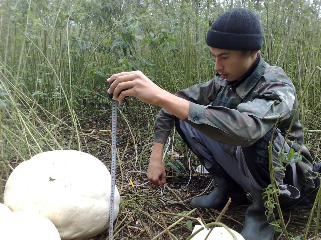 После этого Александр Павлов и Никита Безукладнов стали ежедневно измерять прирост грибов. Муромцевские любители природы определили, что вширь грибы растут гораздо интенсивнее, чем в высоту.