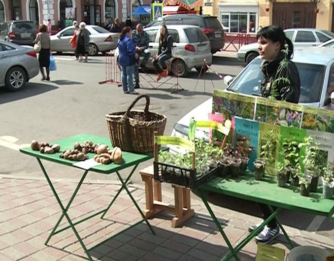 В Ярославле появились первые грибы