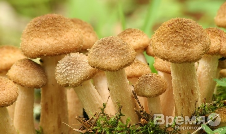 Воронежцы ради грибов готовы перелезть даже через забор с колючей проволокой