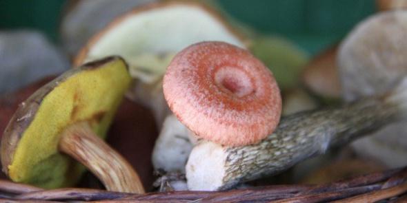 Санкт-Петербург: Роспотребнадзор просит проверять грибы и ягоды на радиоактивность