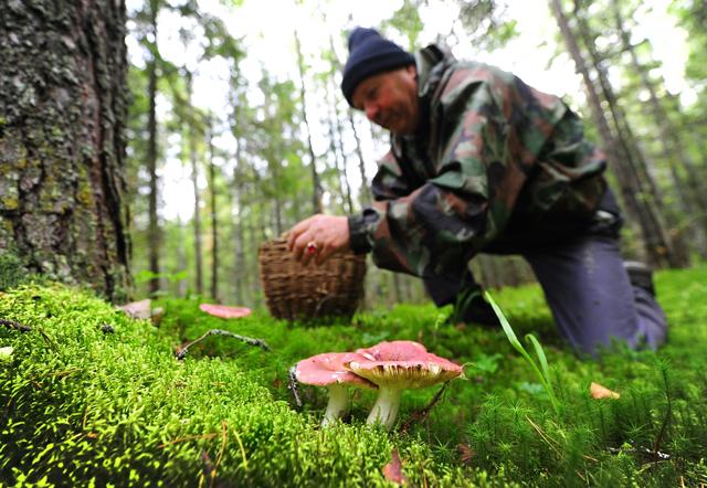 Бабье лето в ноябре: в Москве настал грибной сезон
