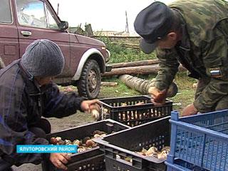 «Тихая охота» приносит предприимчивым грибникам неплохой доход