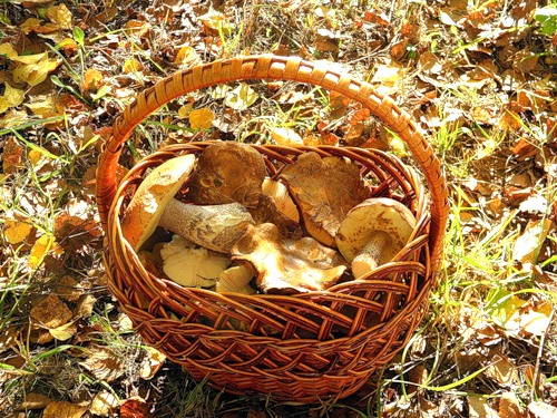 Осенняя корзинка с грибами