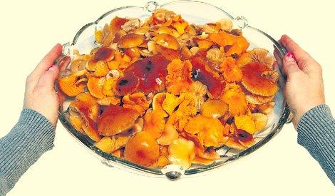 Грибники отправились в декабрьский лес по грибы