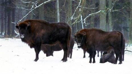 В Беларуси меняют границы заповедных зон