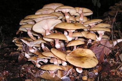 В Эстонии за сбор грибов в частном лесу нужно платить