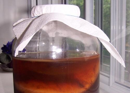 Вместо колы – чайный гриб