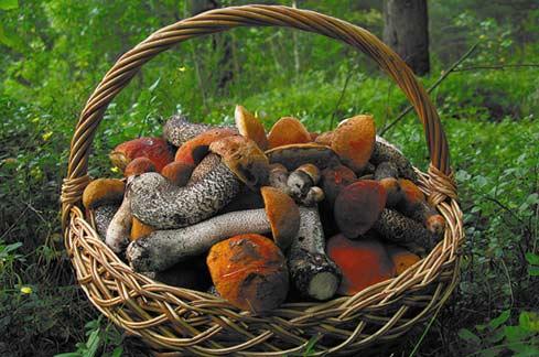 Каждый гриб имеет свою тайну. Фото Станислав Кривошеев