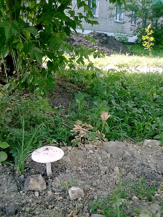 В Пензе рядом с помойкой выросли грибы