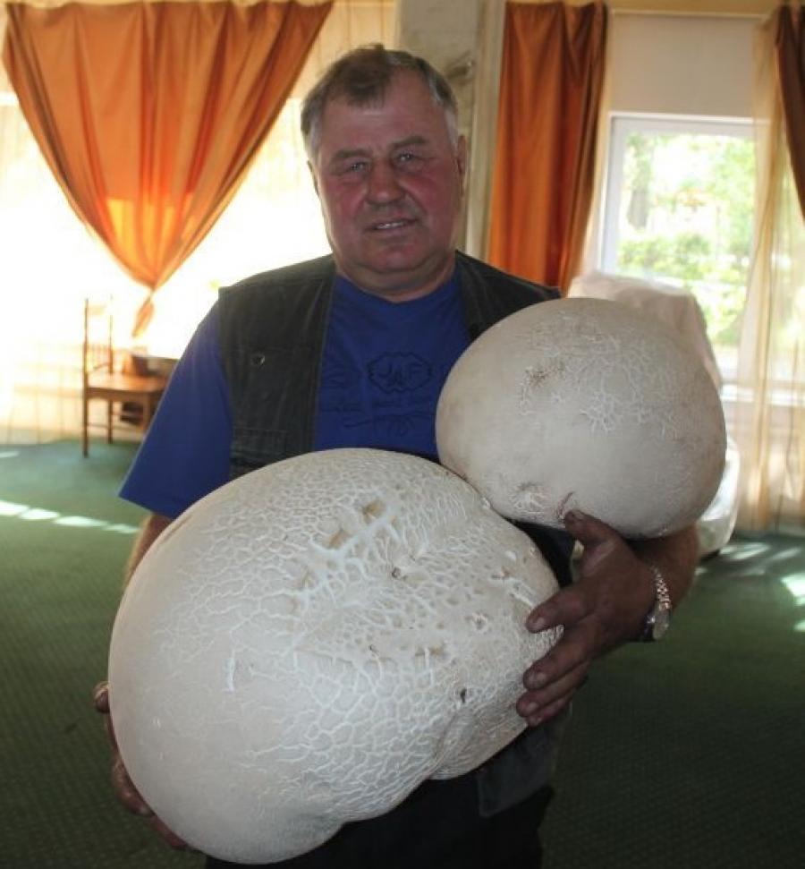 Тракторист из Красноярского края нашел гриб весом 6 килограммов