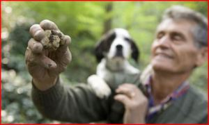 Выходим в итальянский лес с Trifolau и наслаждаемся трюфелями
