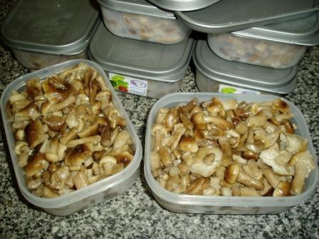 Советы по заготовке грибов