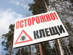 В Алтайском крае отмечается спад активности клещейа