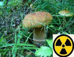 Челябинцы могут бесплатно проверить на вредность лесные грибы и ягоды