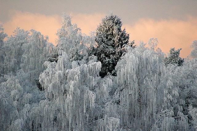 Народные приметы: если январь холодный, июль будет сухой и жаркий — не жди грибов до осени