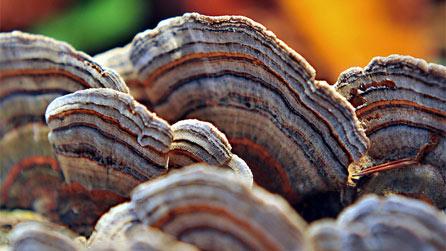 Из другого царства: грибы