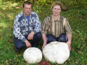 Верхнедвинские грибники ели один гриб две недели