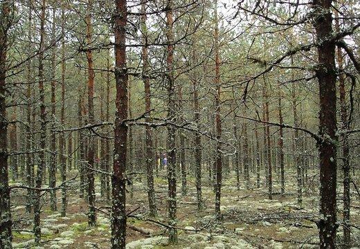 В Руцаве — соревнования грибников с фонариками
