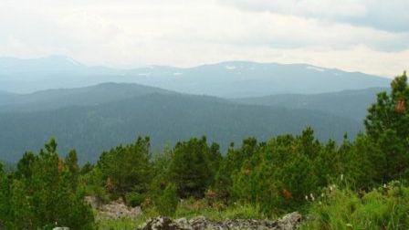 С августа в Хакасии разрешено собирать дикоросы