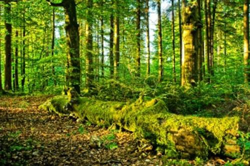 Поход в лес может обернуться трагедией