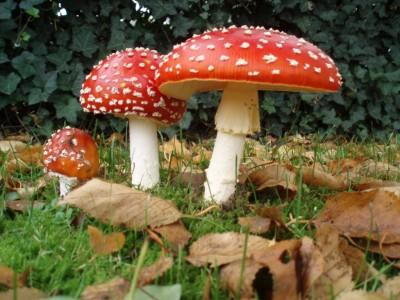 Отравление грибами обойдется крымчанину в 2 тысячи гривен в день