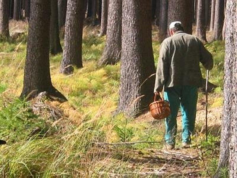 Грибные места Ленинградской области: куда поехать в выходной