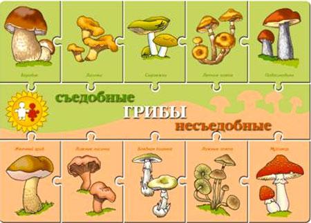 Как отличить съедобный гриб от ядовитого?