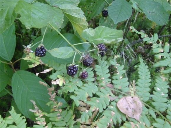 В соответствии с Федеральным законом «Об особо охраняемых природных территориях» сбор грибов, ягод, лекарственных трав на территории биосферного заповедника строго запрещён