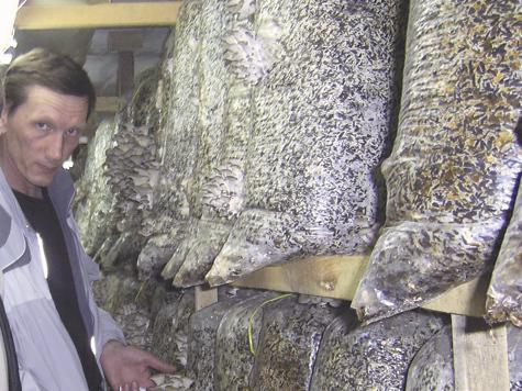 Выращивать грибы надо исключительно в теплице